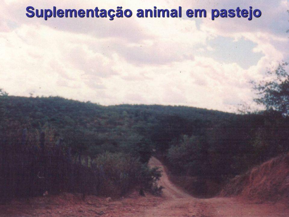 Suplementação animal em pastejo