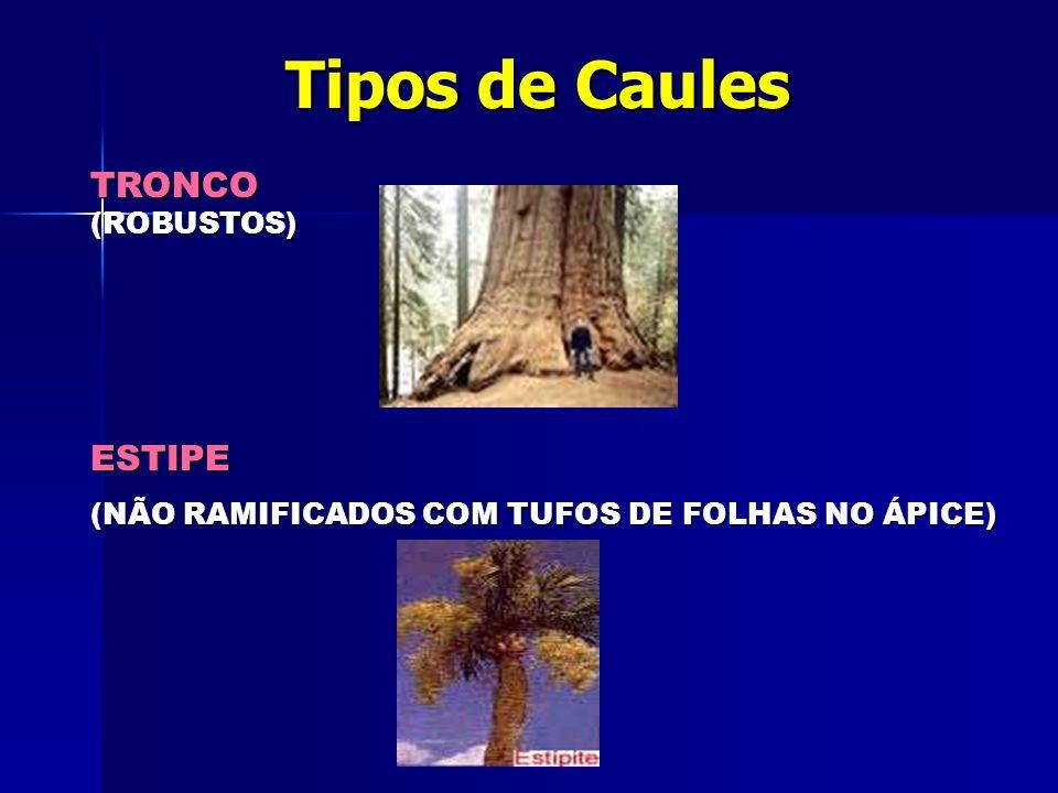 Tipos de Caules TRONCO ESTIPE (ROBUSTOS)