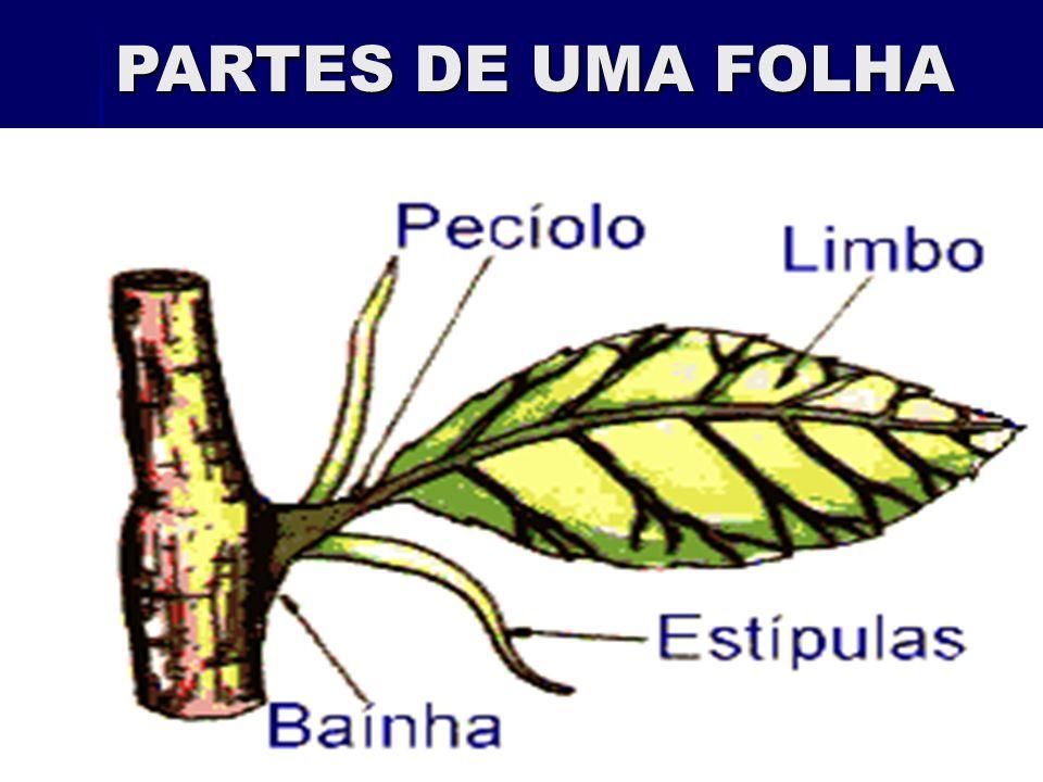 PARTES DE UMA FOLHA