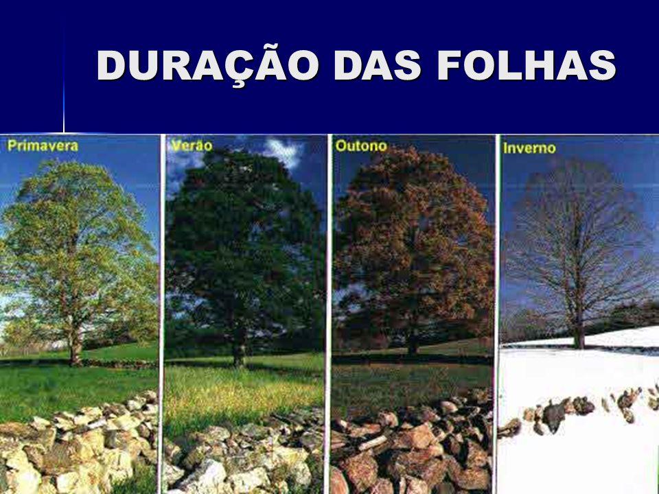DURAÇÃO DAS FOLHAS