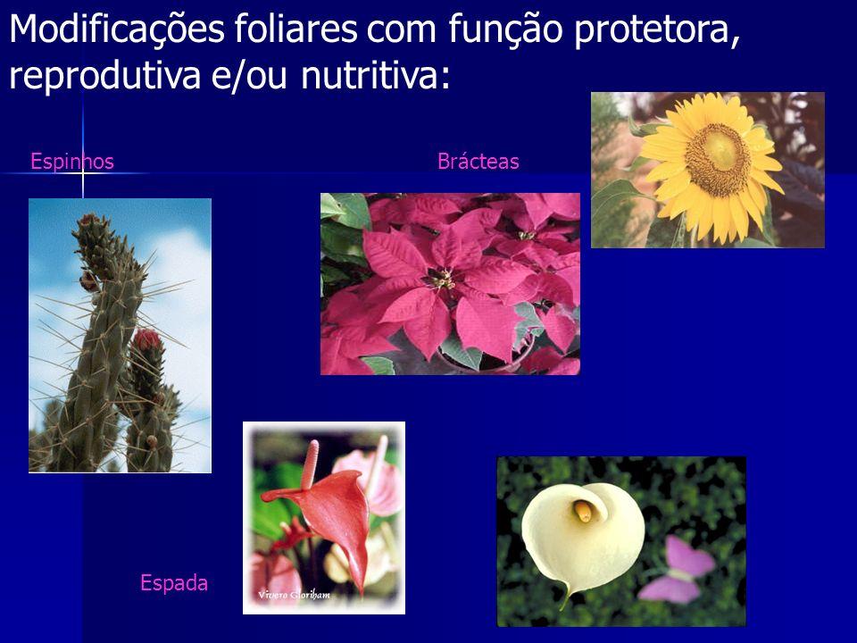Modificações foliares com função protetora, reprodutiva e/ou nutritiva:
