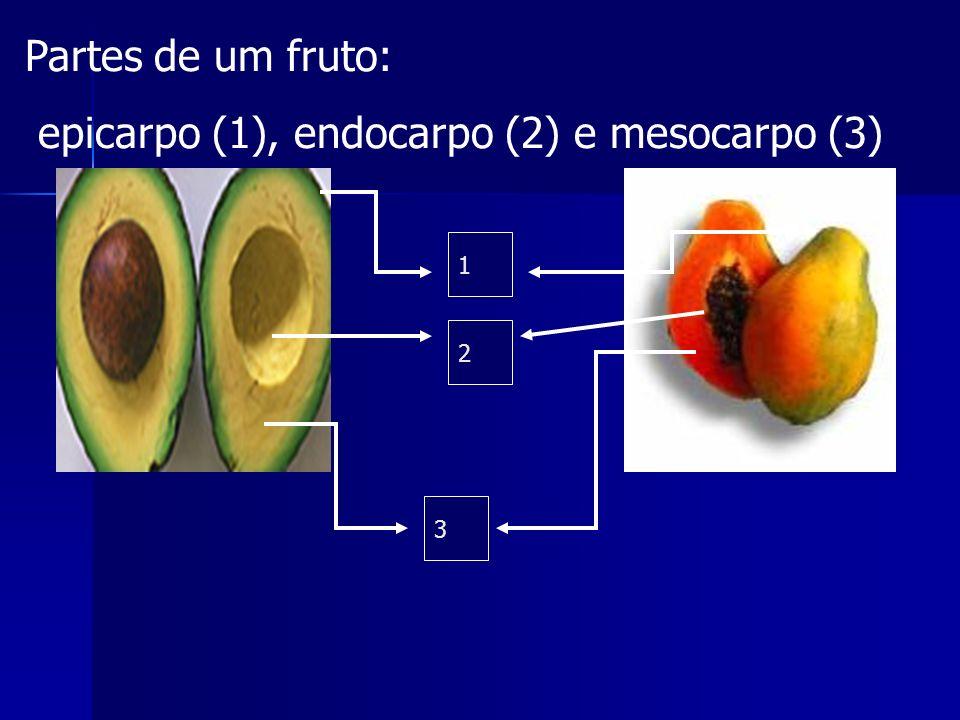 epicarpo (1), endocarpo (2) e mesocarpo (3)