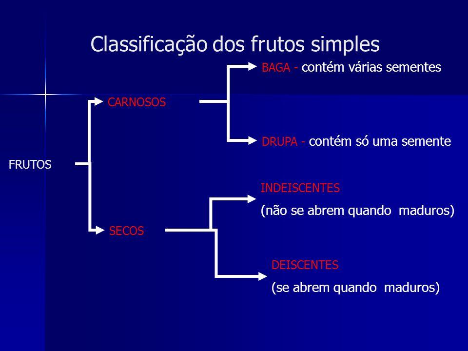 Classificação dos frutos simples