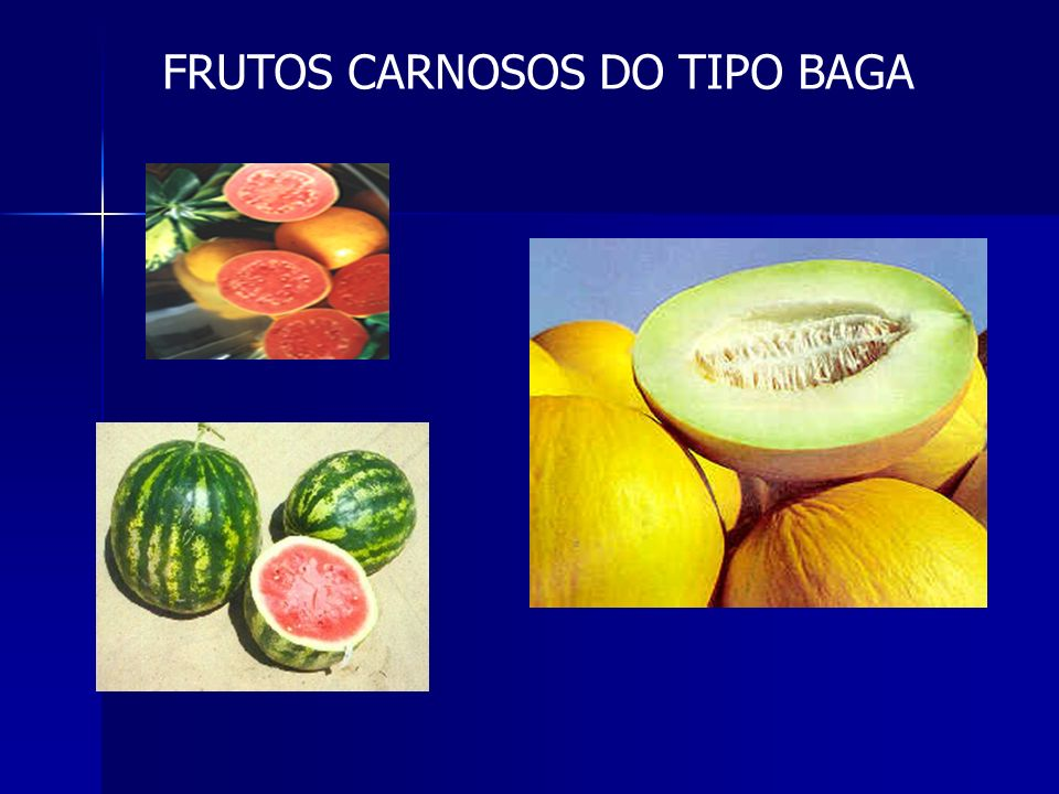 FRUTOS CARNOSOS DO TIPO BAGA