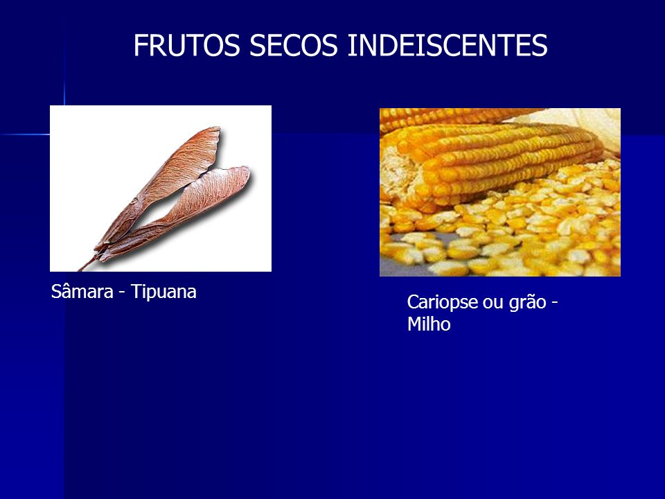 FRUTOS SECOS INDEISCENTES