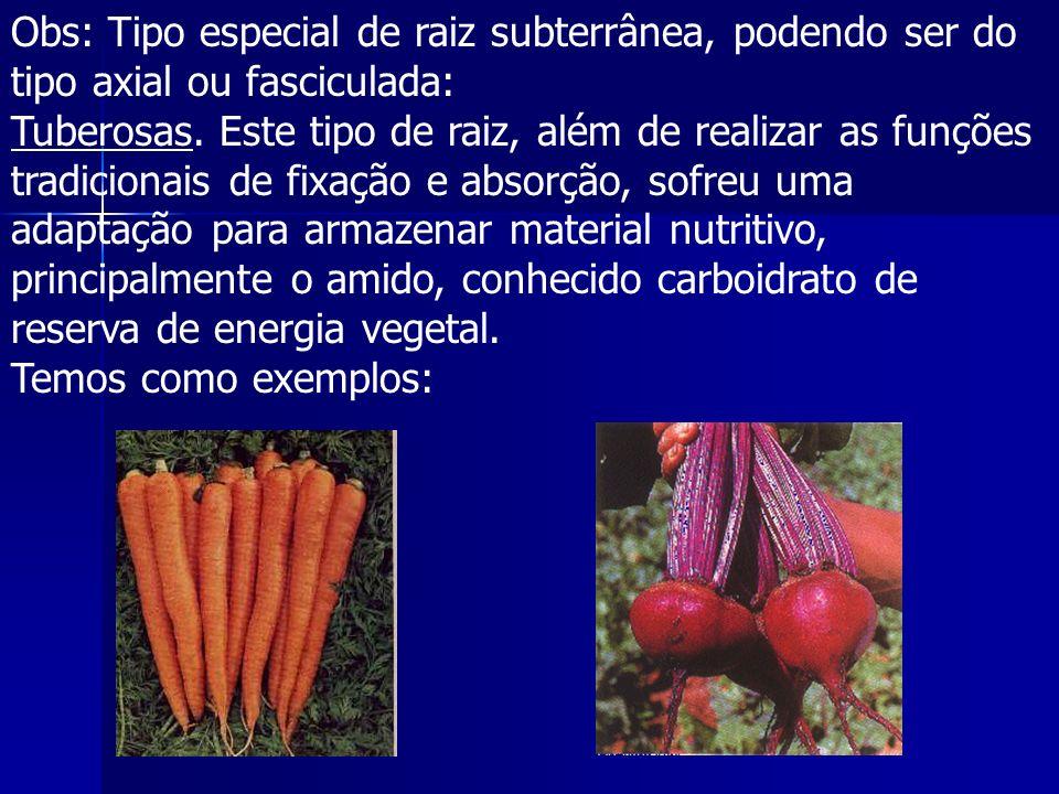 Obs: Tipo especial de raiz subterrânea, podendo ser do tipo axial ou fasciculada: