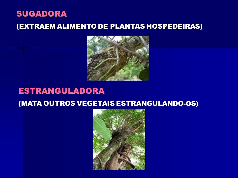 SUGADORA ESTRANGULADORA (EXTRAEM ALIMENTO DE PLANTAS HOSPEDEIRAS)