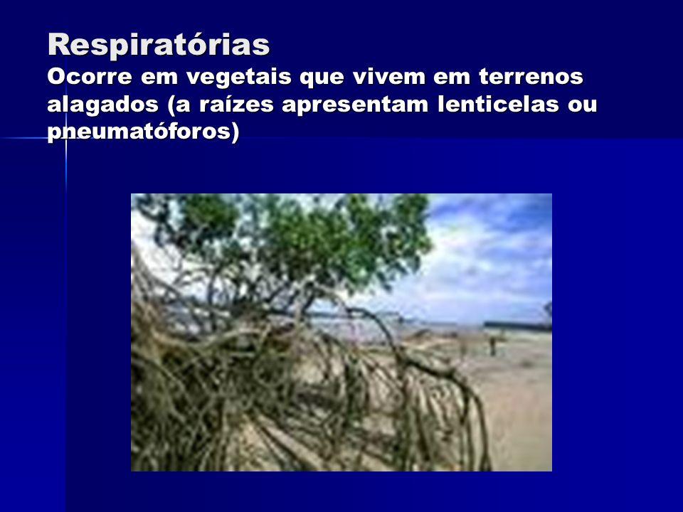 Respiratórias Ocorre em vegetais que vivem em terrenos alagados (a raízes apresentam lenticelas ou pneumatóforos)