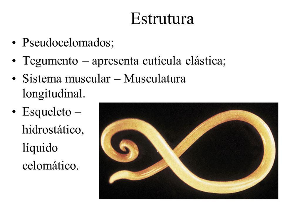 Estrutura Pseudocelomados; Tegumento – apresenta cutícula elástica;