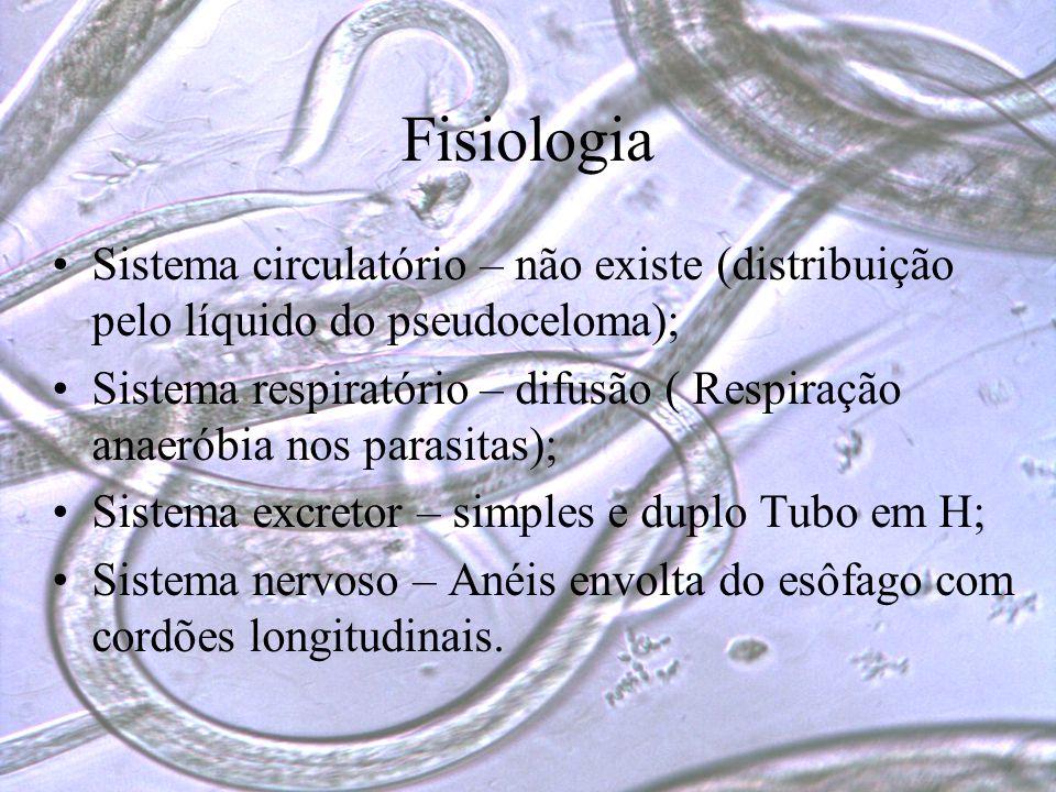 Fisiologia Sistema circulatório – não existe (distribuição pelo líquido do pseudoceloma);