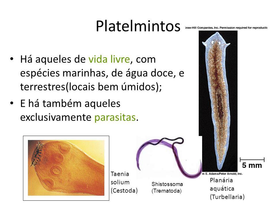 Platelmintos Há aqueles de vida livre, com espécies marinhas, de água doce, e terrestres(locais bem úmidos);