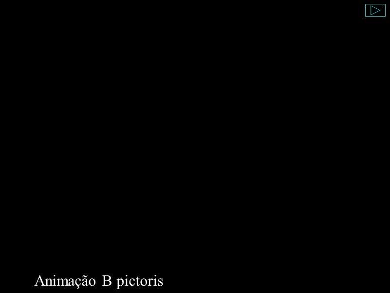 Animação B pictoris