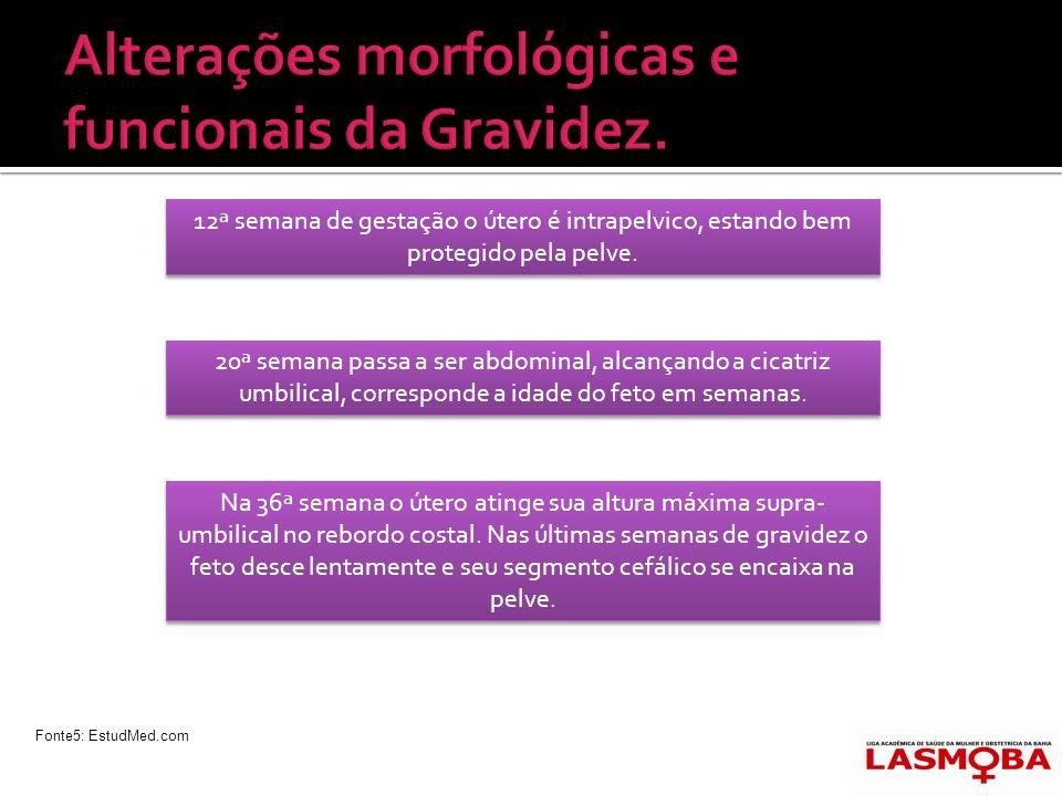 Alterações morfológicas e funcionais da Gravidez.