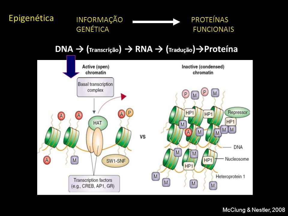 DNA → (Transcrição) → RNA → (Tradução)→Proteína