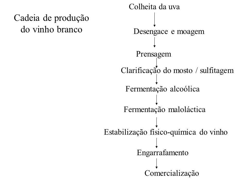 Cadeia de produção do vinho branco