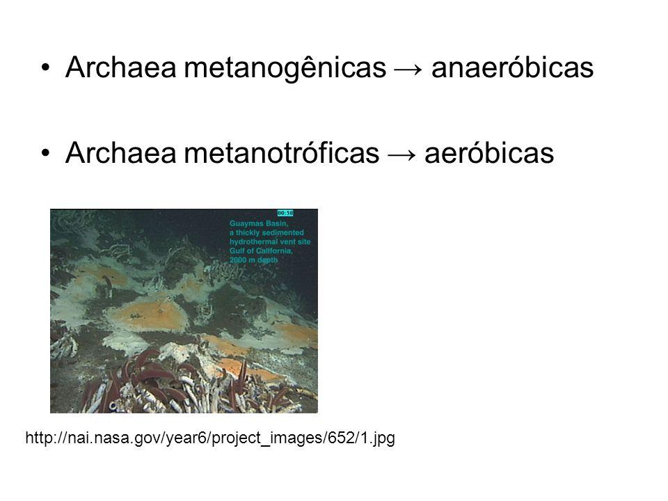 Archaea metanogênicas → anaeróbicas Archaea metanotróficas → aeróbicas