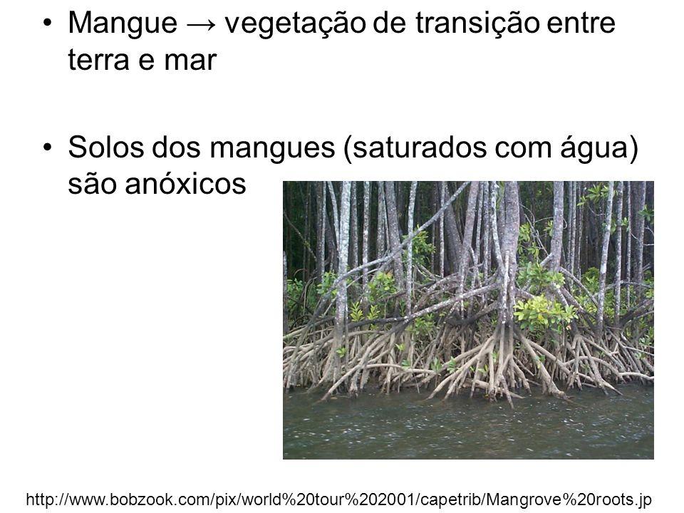 Mangue → vegetação de transição entre terra e mar