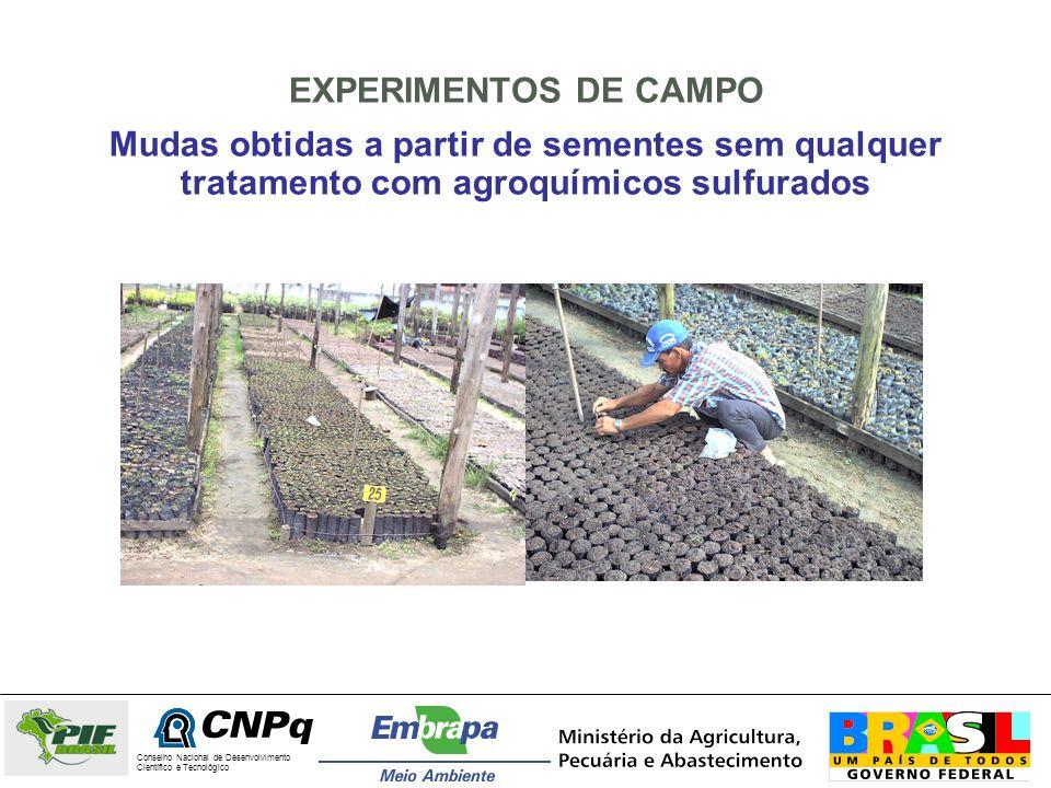 EXPERIMENTOS DE CAMPO Mudas obtidas a partir de sementes sem qualquer tratamento com agroquímicos sulfurados.
