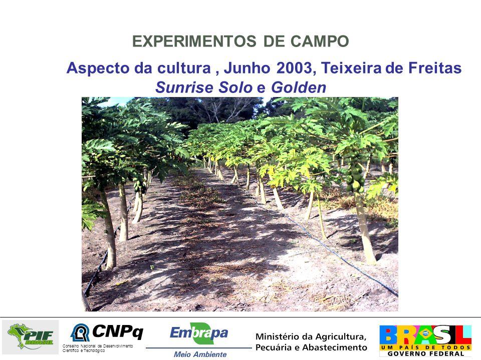 EXPERIMENTOS DE CAMPO Aspecto da cultura , Junho 2003, Teixeira de Freitas Sunrise Solo e Golden. Conselho Nacional de Desenvolvimento.