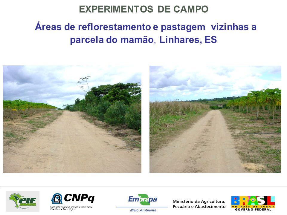 EXPERIMENTOS DE CAMPO Áreas de reflorestamento e pastagem vizinhas a parcela do mamão, Linhares, ES