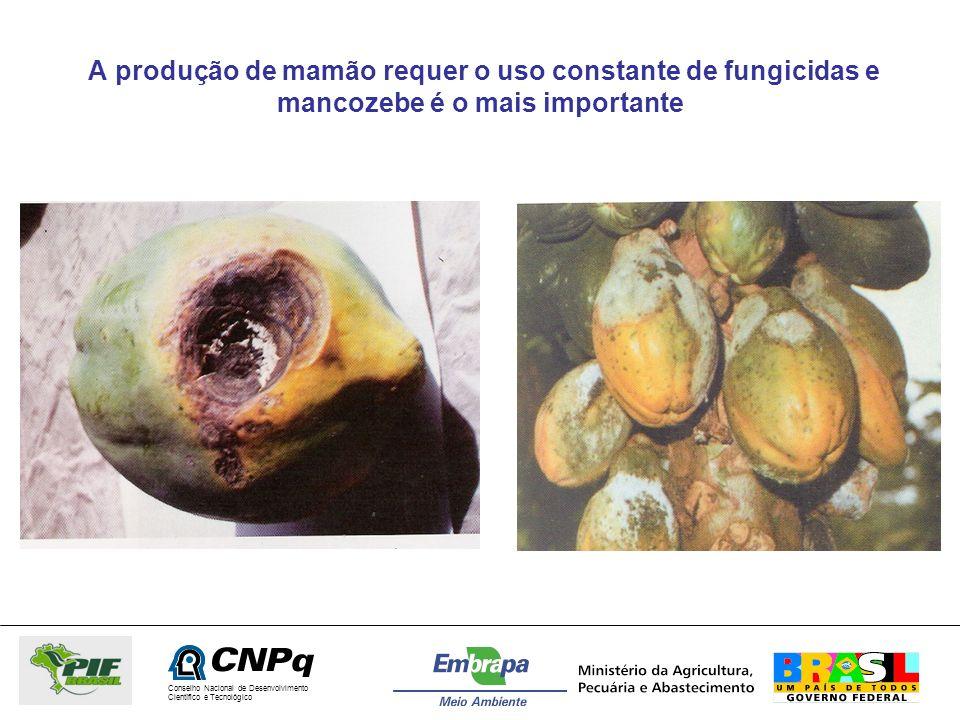 A produção de mamão requer o uso constante de fungicidas e mancozebe é o mais importante