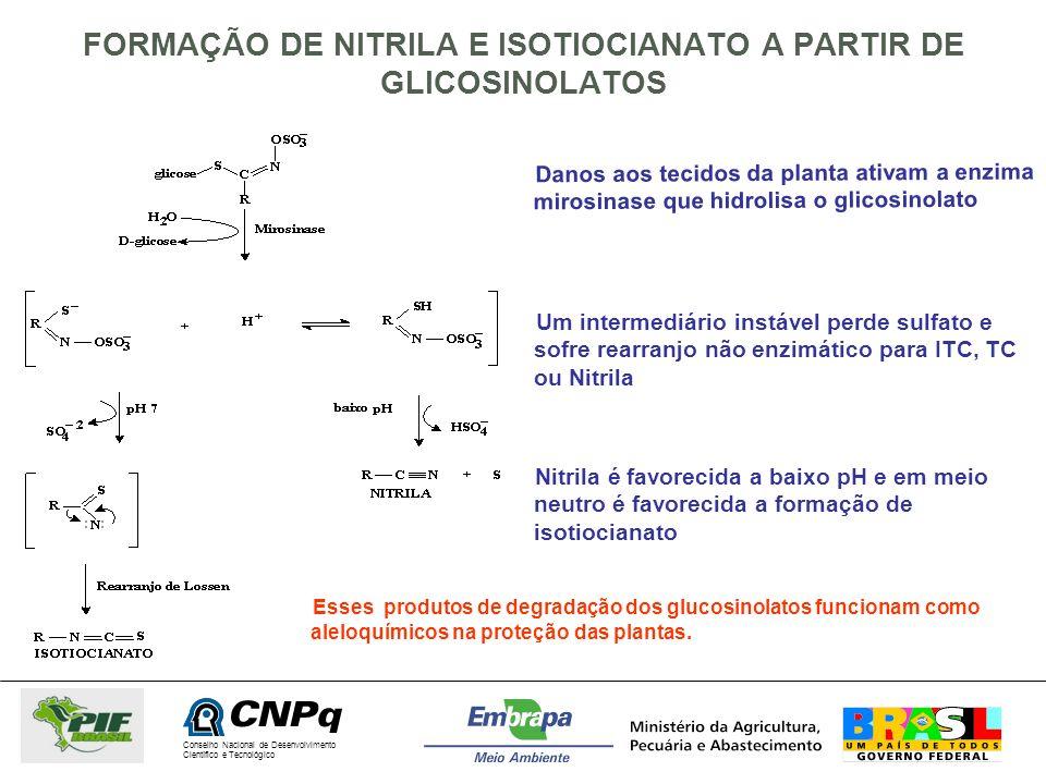 FORMAÇÃO DE NITRILA E ISOTIOCIANATO A PARTIR DE GLICOSINOLATOS