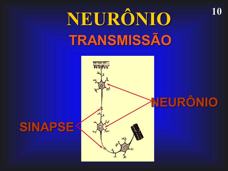 NEURÔNIO TRANSMISSÃO NEURÔNIO SINAPSE