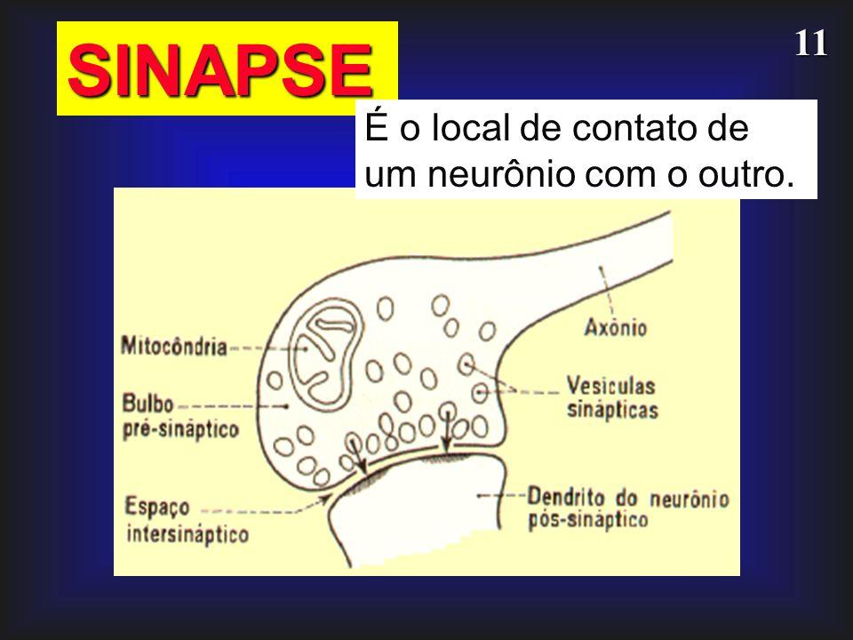 SINAPSE É o local de contato de um neurônio com o outro.