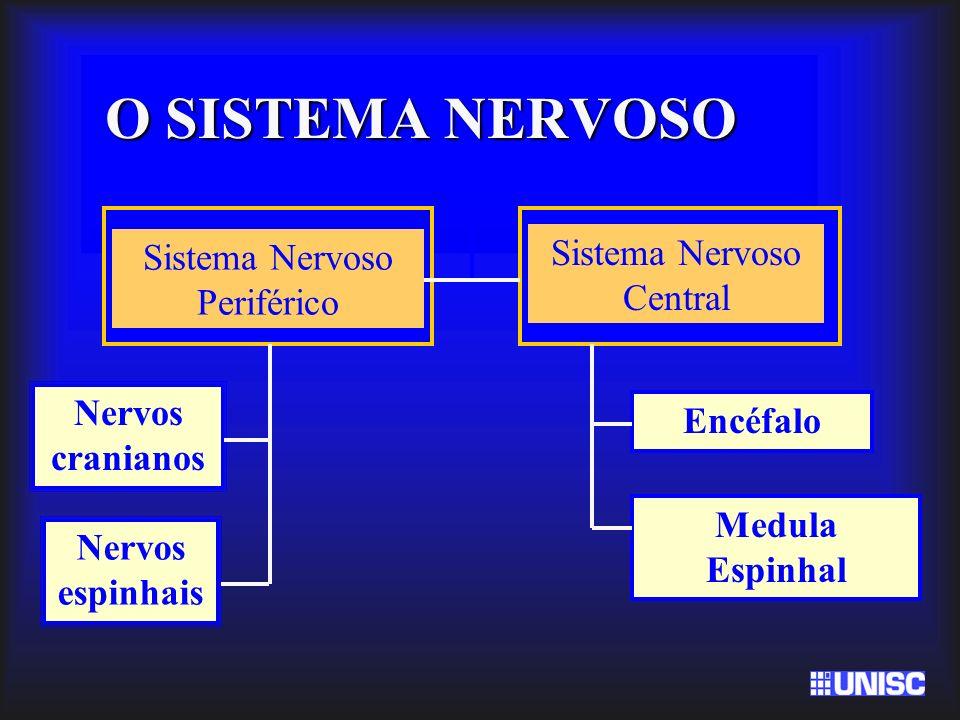 O SISTEMA NERVOSO Sistema Nervoso Central Sistema Nervoso Periférico
