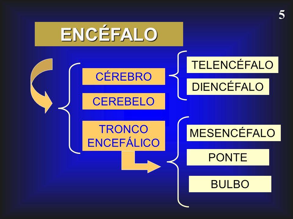 ENCÉFALO TELENCÉFALO CÉREBRO DIENCÉFALO CEREBELO TRONCO ENCEFÁLICO
