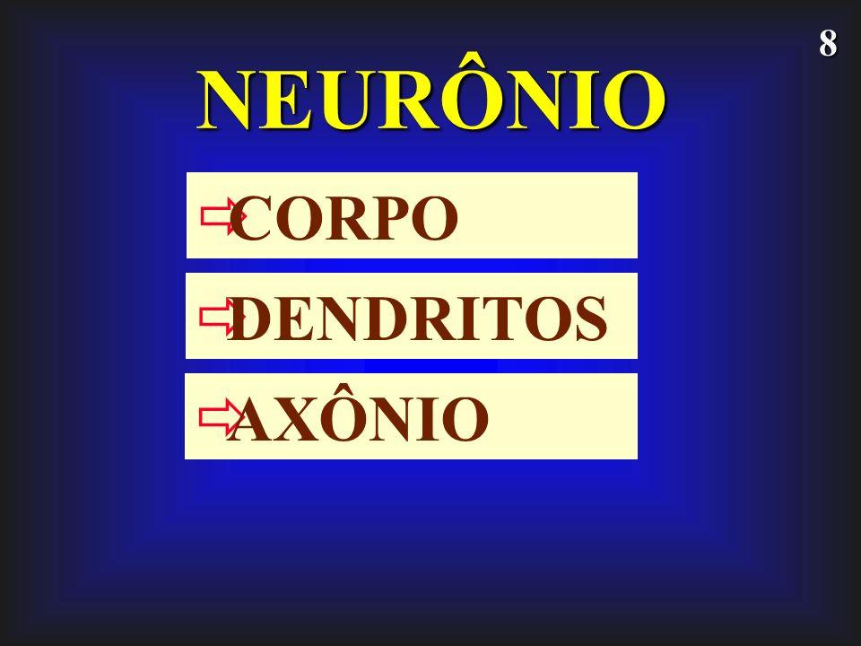 NEURÔNIO CORPO DENDRITOS AXÔNIO