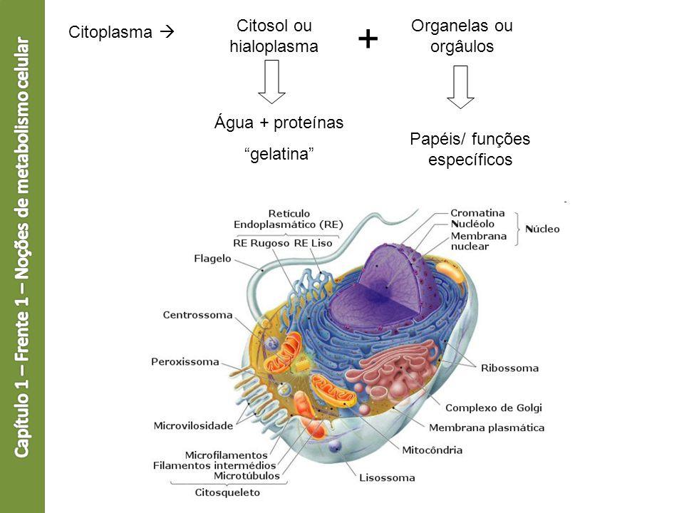 + Capítulo 1 – Frente 1 – Noções de metabolismo celular