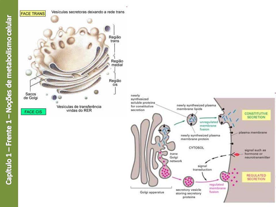 Capítulo 1 – Frente 1 – Noções de metabolismo celular