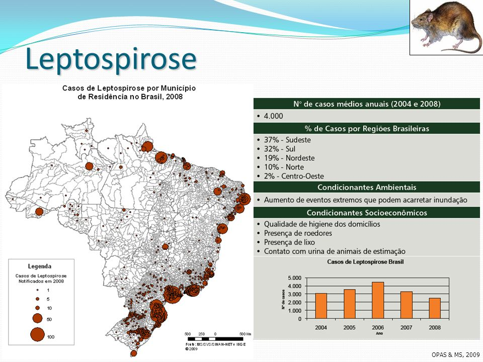 Leptospirose OPAS & MS, 2009