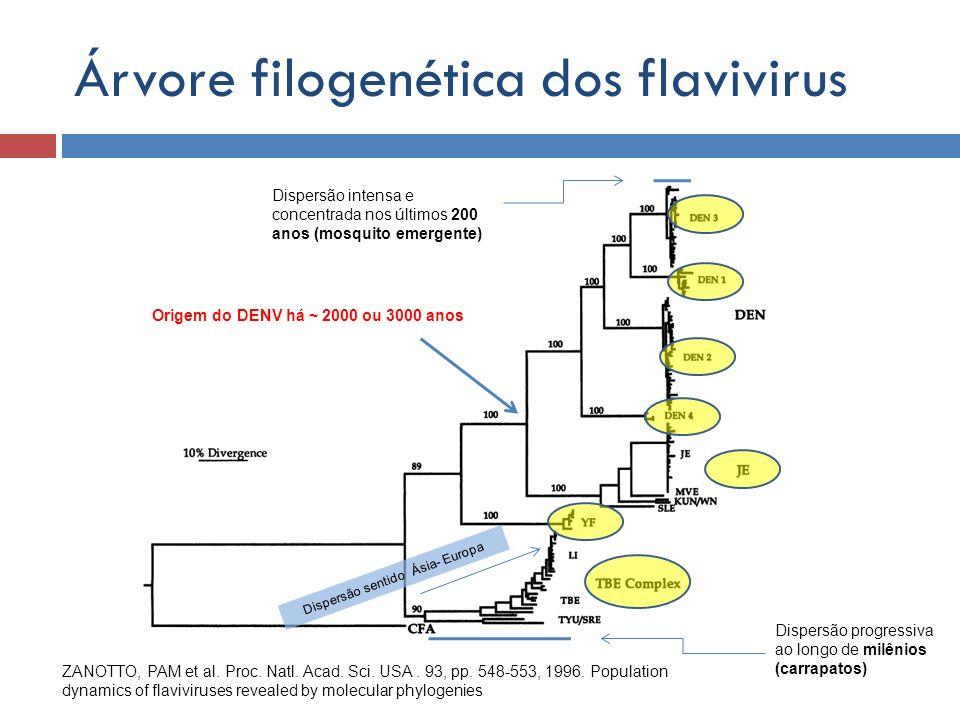 Árvore filogenética dos flavivirus