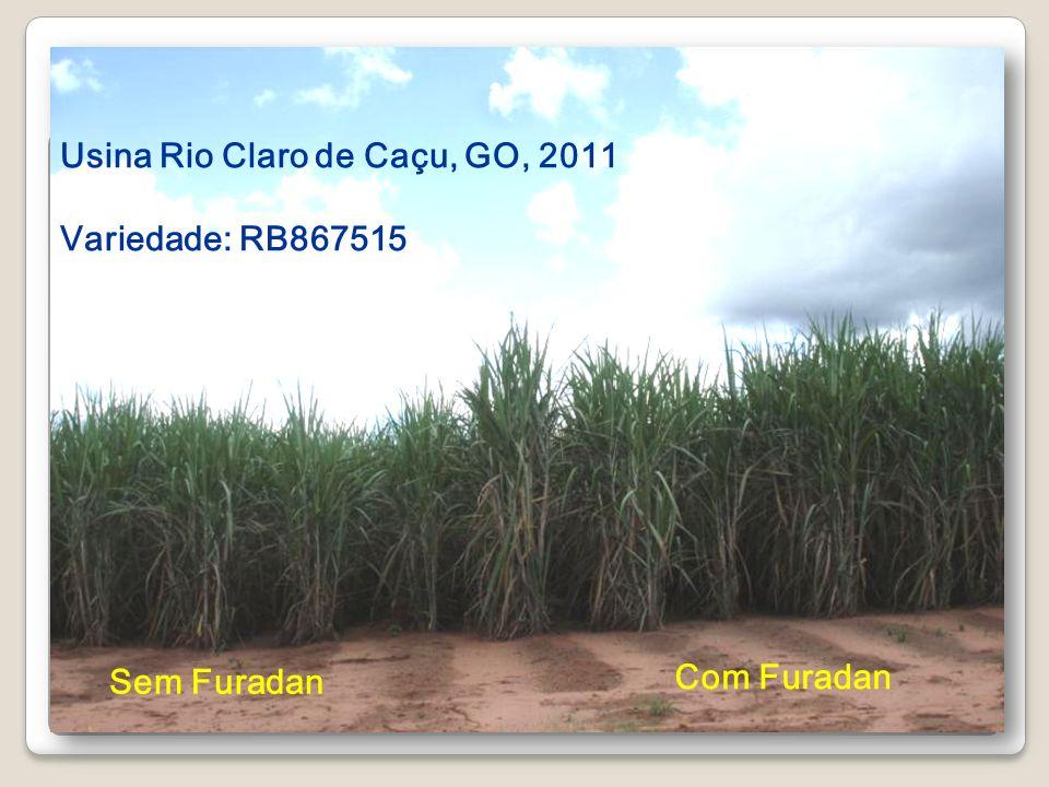 Usina Rio Claro de Caçu, GO, 2011