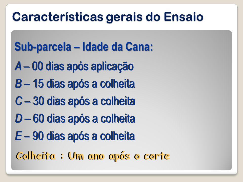 Características gerais do Ensaio