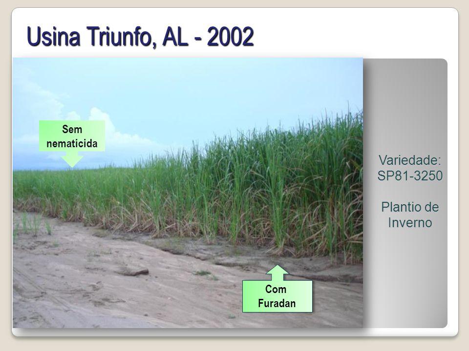Usina Triunfo, AL - 2002 Variedade: SP81-3250 Plantio de Inverno