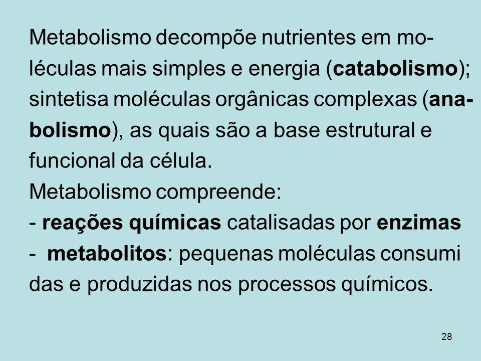Metabolismo decompõe nutrientes em mo-