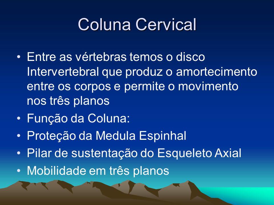 Coluna Cervical Entre as vértebras temos o disco Intervertebral que produz o amortecimento entre os corpos e permite o movimento nos três planos.