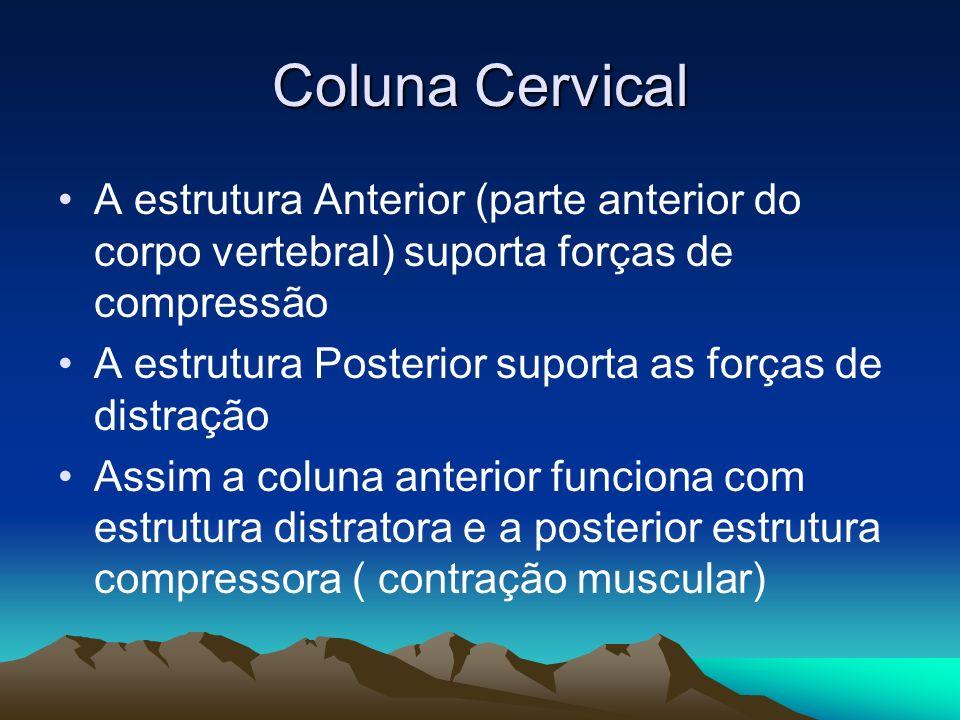 Coluna Cervical A estrutura Anterior (parte anterior do corpo vertebral) suporta forças de compressão.
