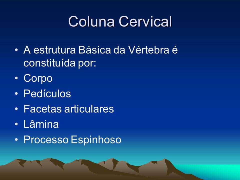 Coluna Cervical A estrutura Básica da Vértebra é constituída por: