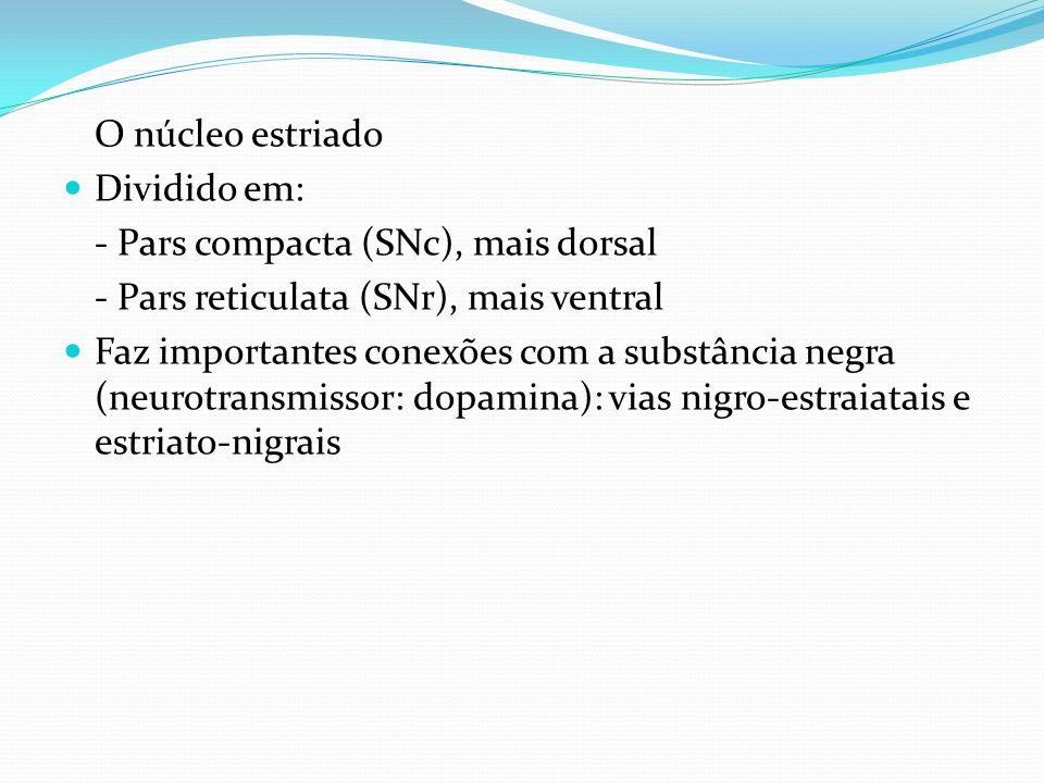 O núcleo estriadoDividido em: - Pars compacta (SNc), mais dorsal. - Pars reticulata (SNr), mais ventral.