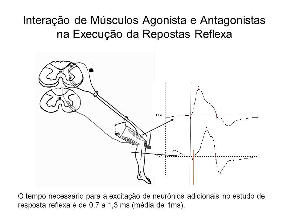 Interação de Músculos Agonista e Antagonistas na Execução da Repostas Reflexa
