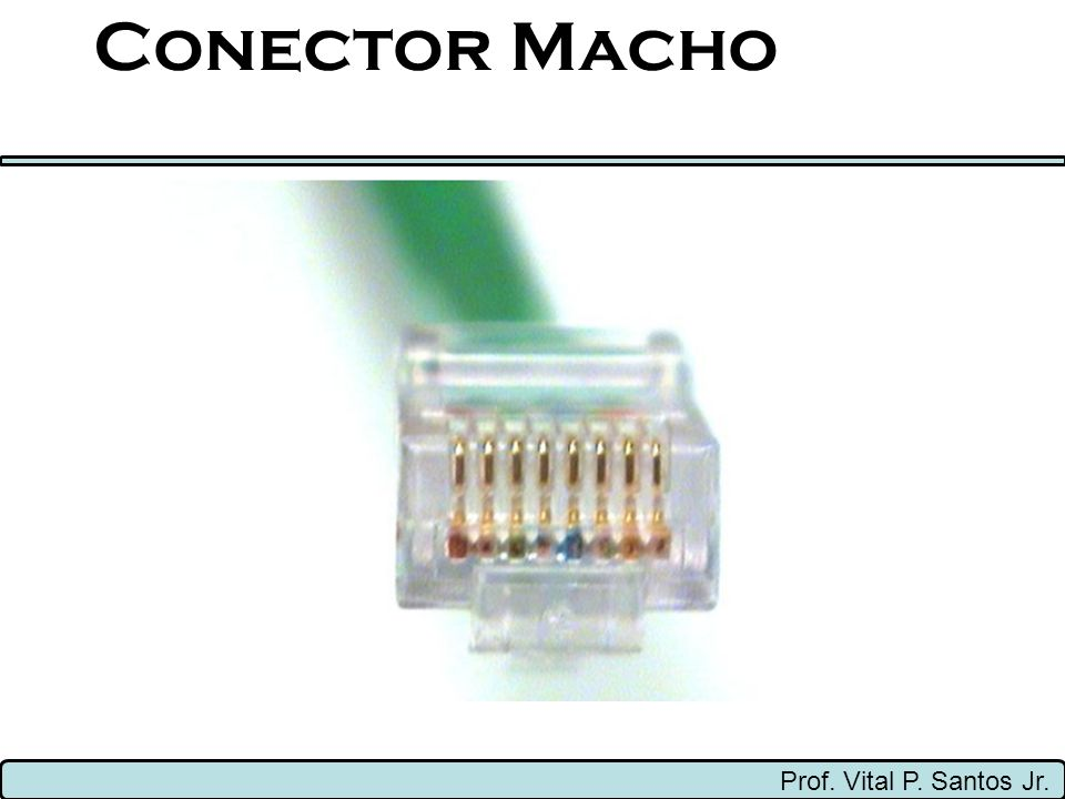 Conector Macho Prof. Vital P. Santos Jr.
