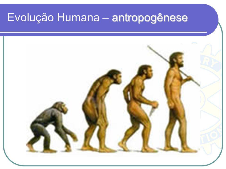 Evolução Humana – antropogênese