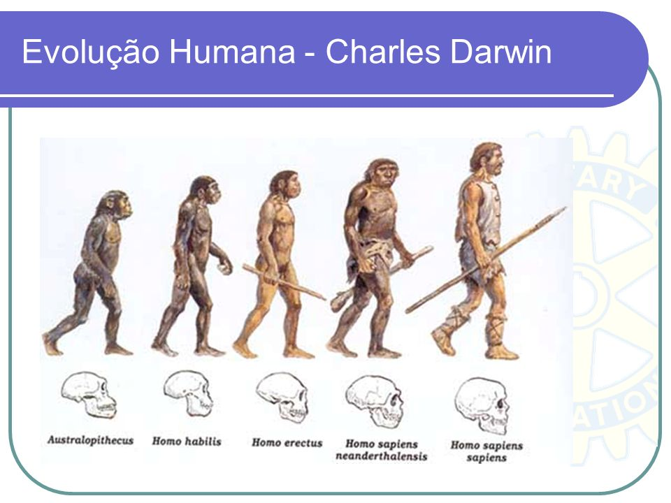 Evolução Humana - Charles Darwin