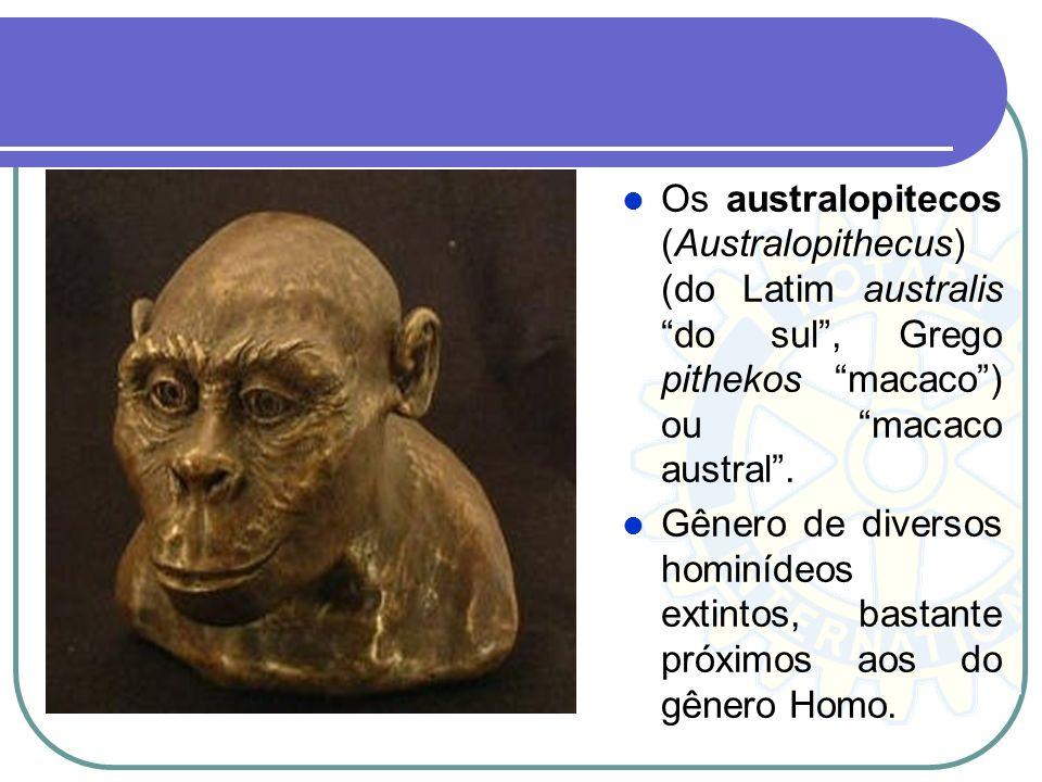 Os australopitecos (Australopithecus) (do Latim australis do sul , Grego pithekos macaco ) ou macaco austral .