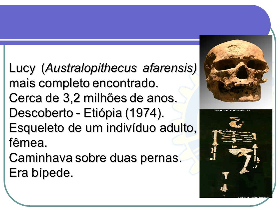 Lucy (Australopithecus afarensis) mais completo encontrado.