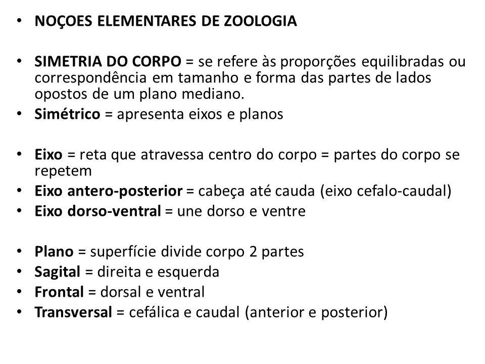 NOÇOES ELEMENTARES DE ZOOLOGIA